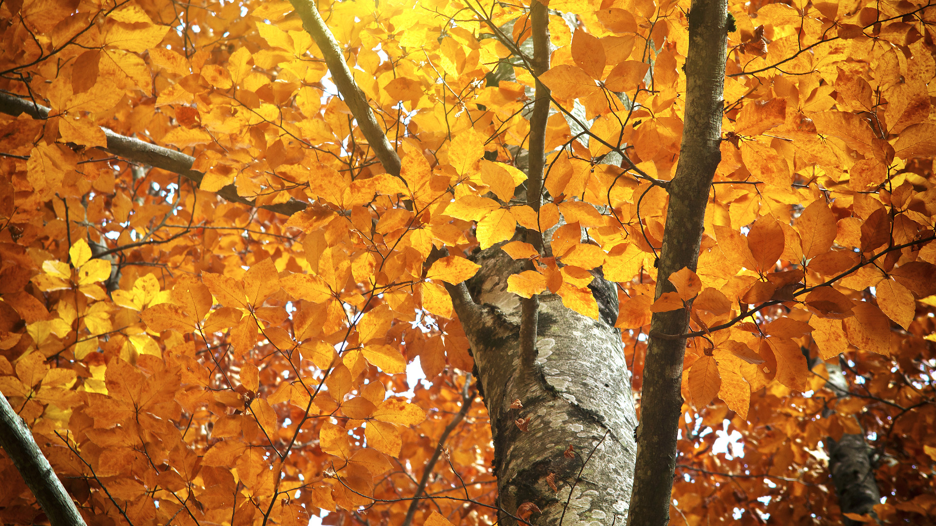 fall-leaves-trunk